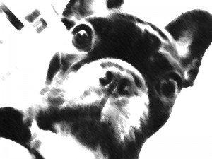 Herman Dog